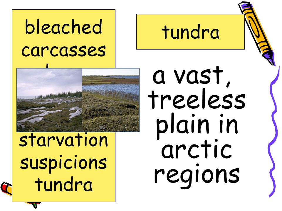 a vast, treeless plain in arctic regions