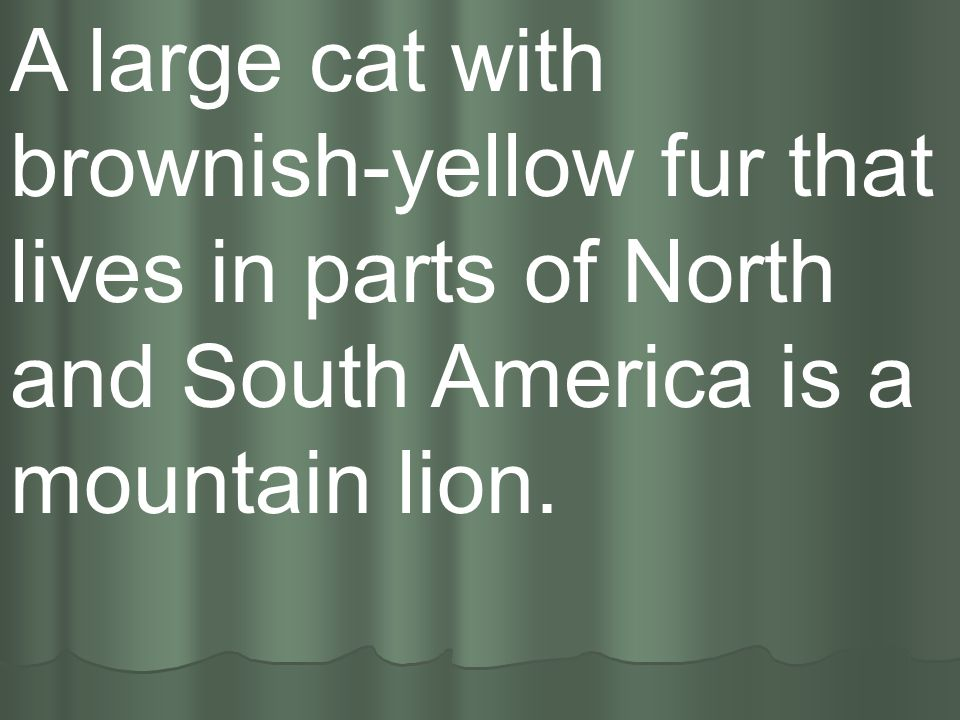 A large cat with brownish-yellow fur that lives in parts of North and South America is a mountain lion.