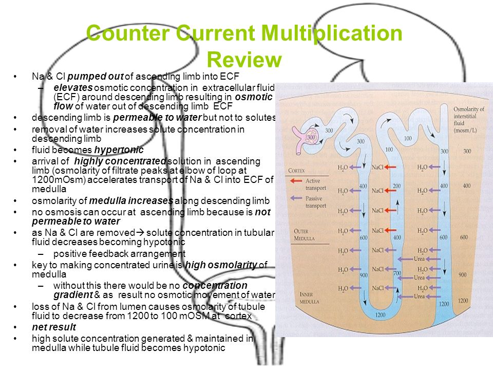 Urinary System Ppt Video Online Download