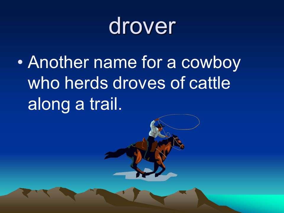 drover Another name for a cowboy who herds droves of cattle along a trail.