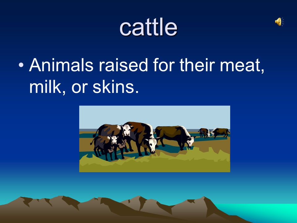 cattle Animals raised for their meat, milk, or skins.