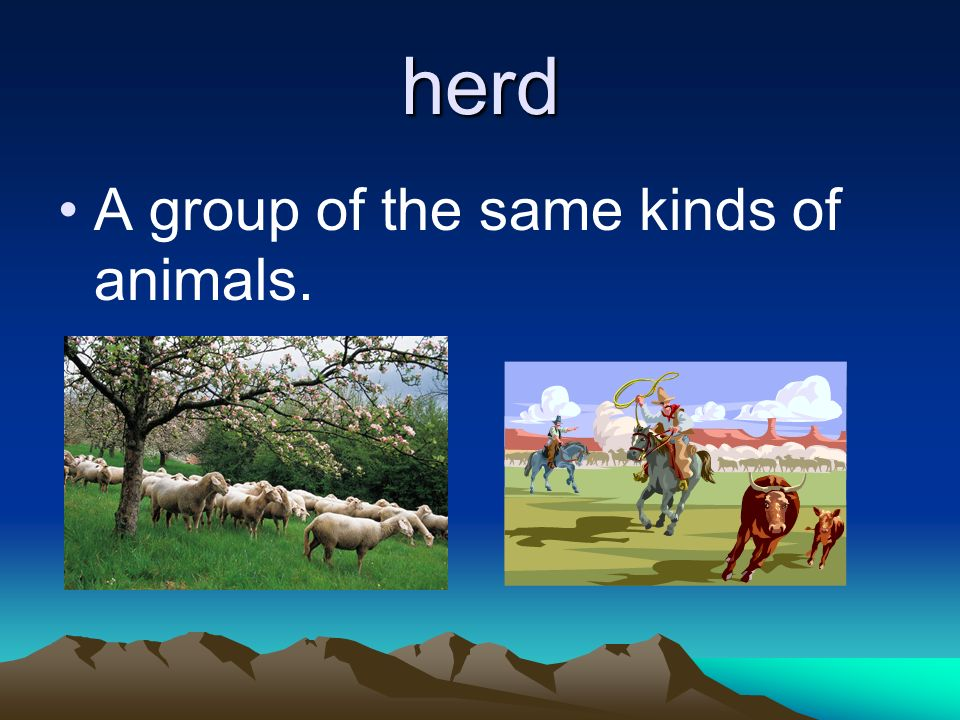 herd A group of the same kinds of animals.