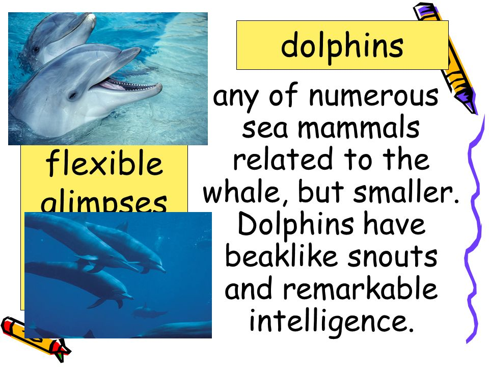 aquarium dolphins dolphins enchanted flexible glimpses pulses surface