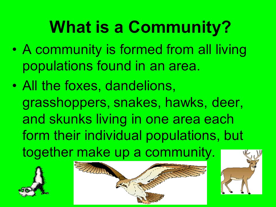 What is a Community A community is formed from all living populations found in an area.