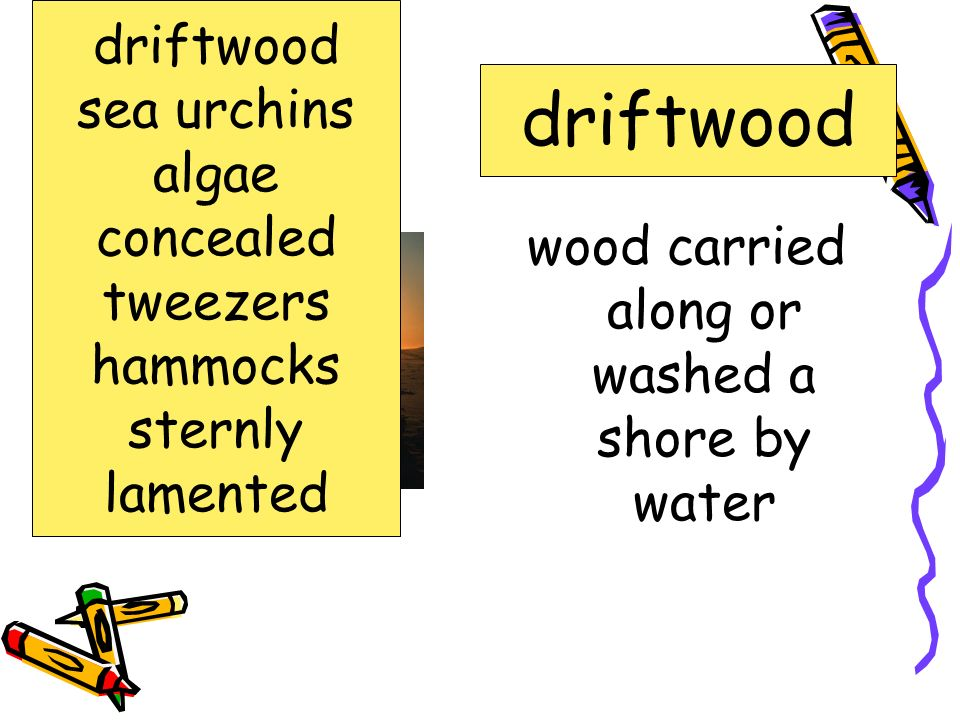 wood carried along or washed a shore by water
