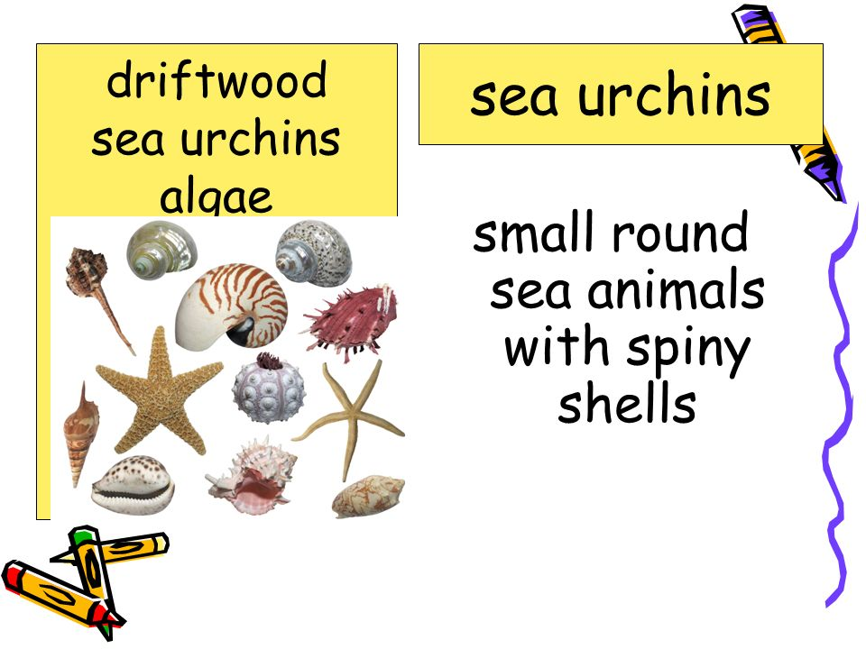 small round sea animals with spiny shells