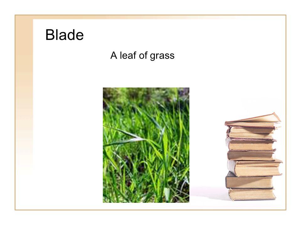 Blade A leaf of grass