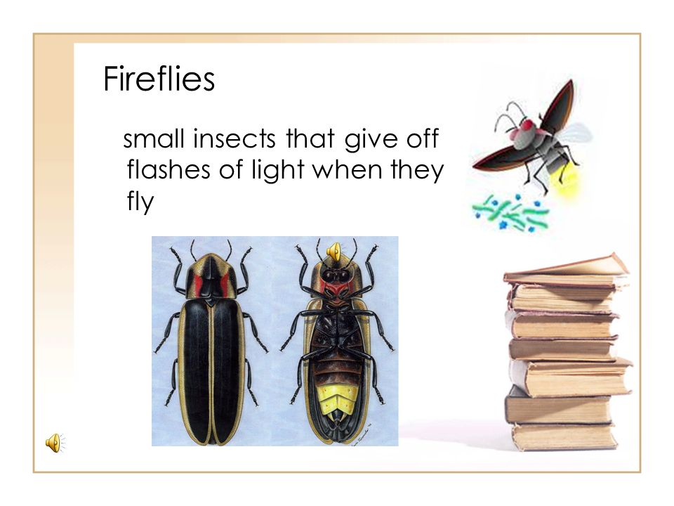 Fireflies small insects that give off flashes of light when they fly