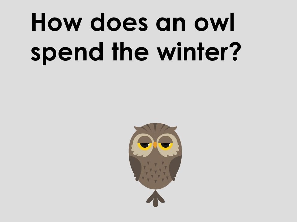 How does an owl spend the winter