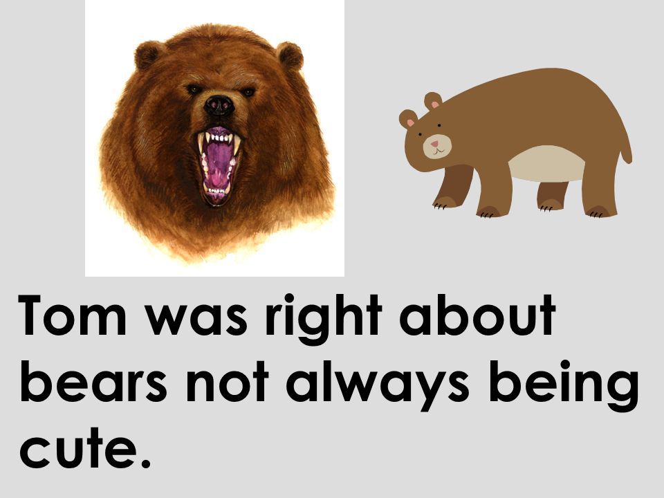 Tom was right about bears not always being cute.
