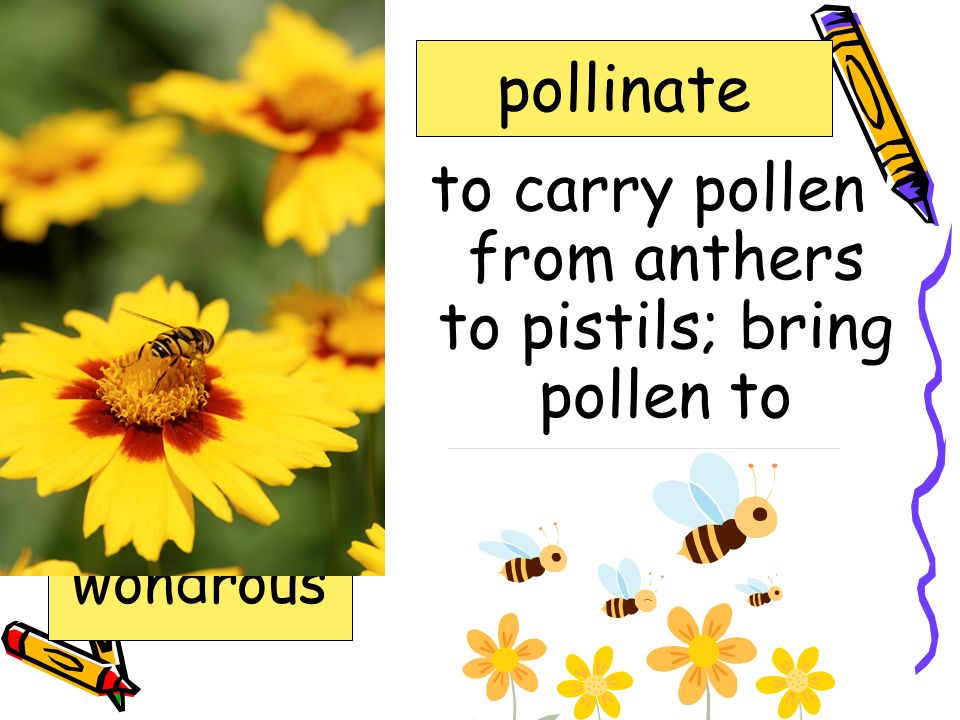 to carry pollen from anthers to pistils; bring pollen to