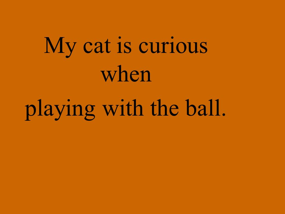 . My cat is curious when playing with the ball.