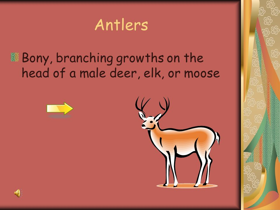 Antlers Bony, branching growths on the head of a male deer, elk, or moose