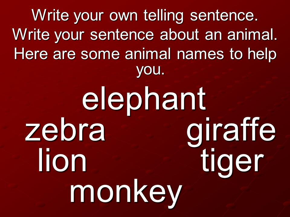 elephant zebra giraffe lion tiger monkey