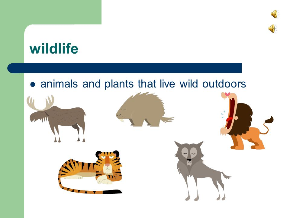 wildlife animals and plants that live wild outdoors