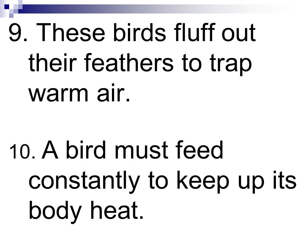 9. These birds fluff out their feathers to trap warm air.