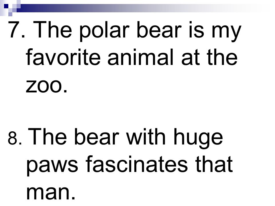 7. The polar bear is my favorite animal at the zoo.