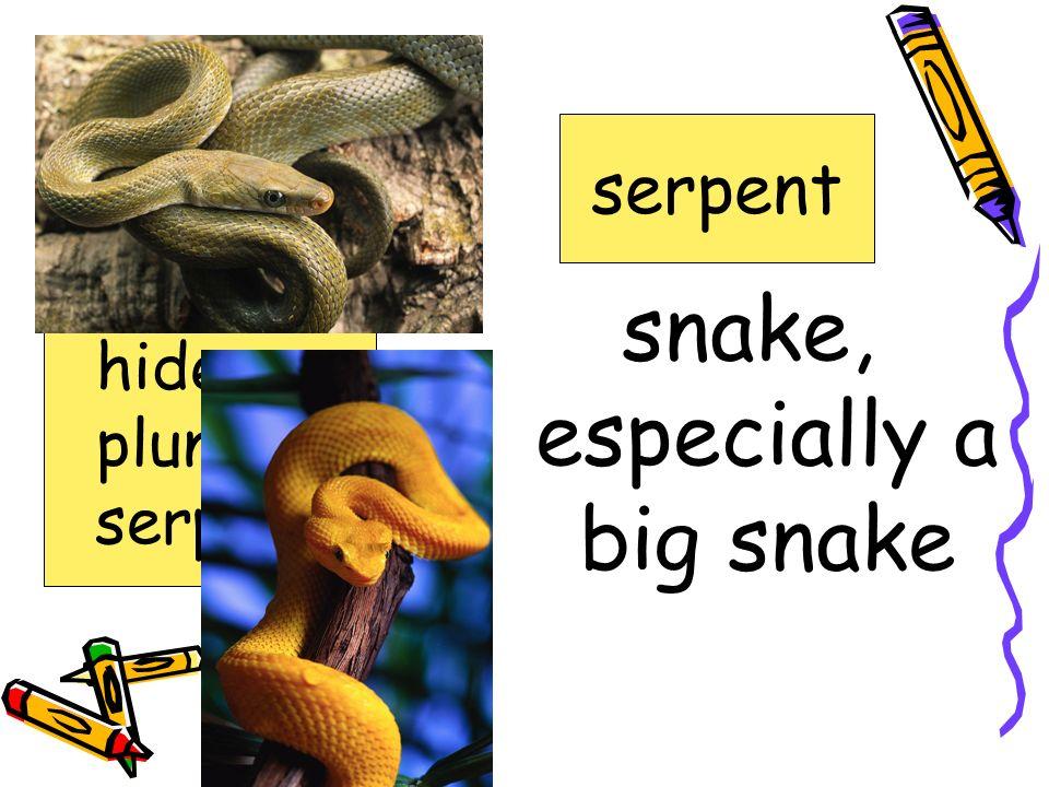 snake, especially a big snake