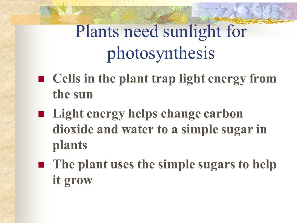 Plants need sunlight for photosynthesis