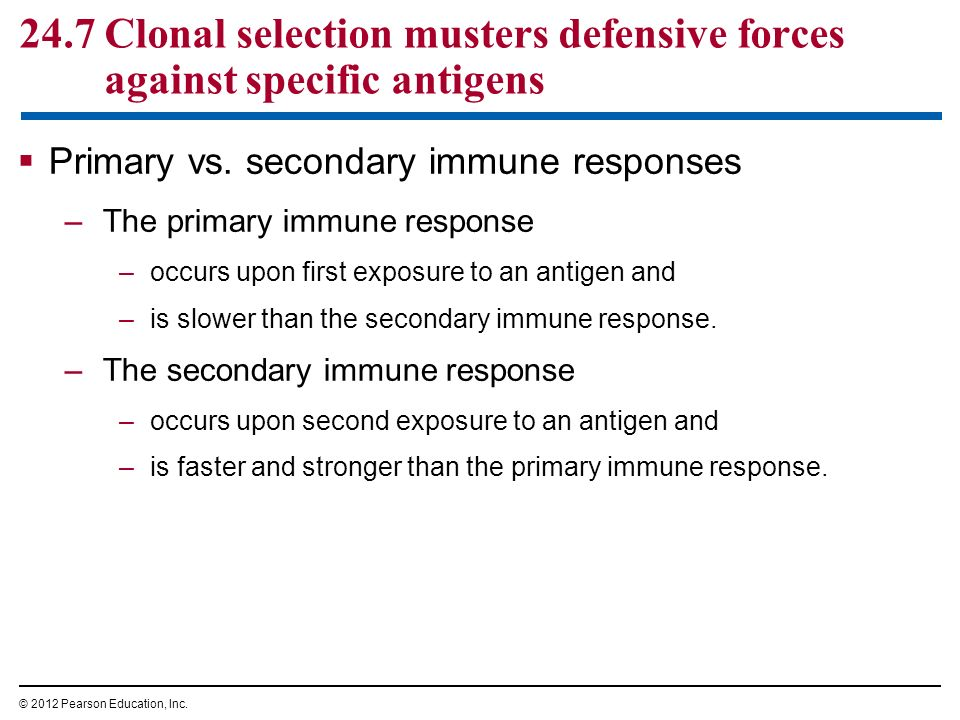 primary and secondary immune response diagrams pdf