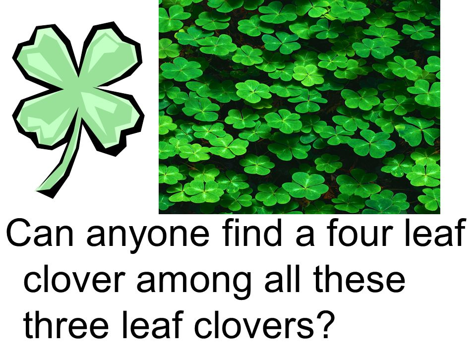 Can anyone find a four leaf clover among all these three leaf clovers