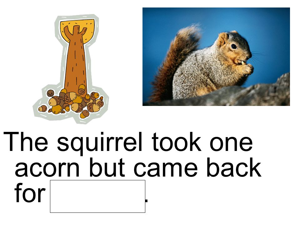 The squirrel took one acorn but came back for another.