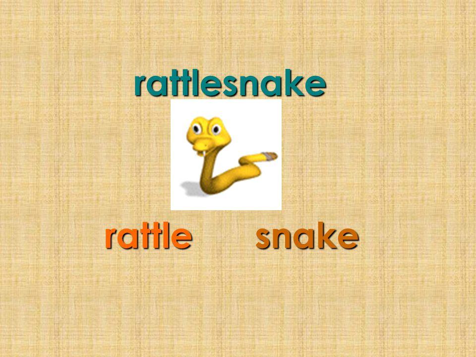 rattlesnake rattle snake