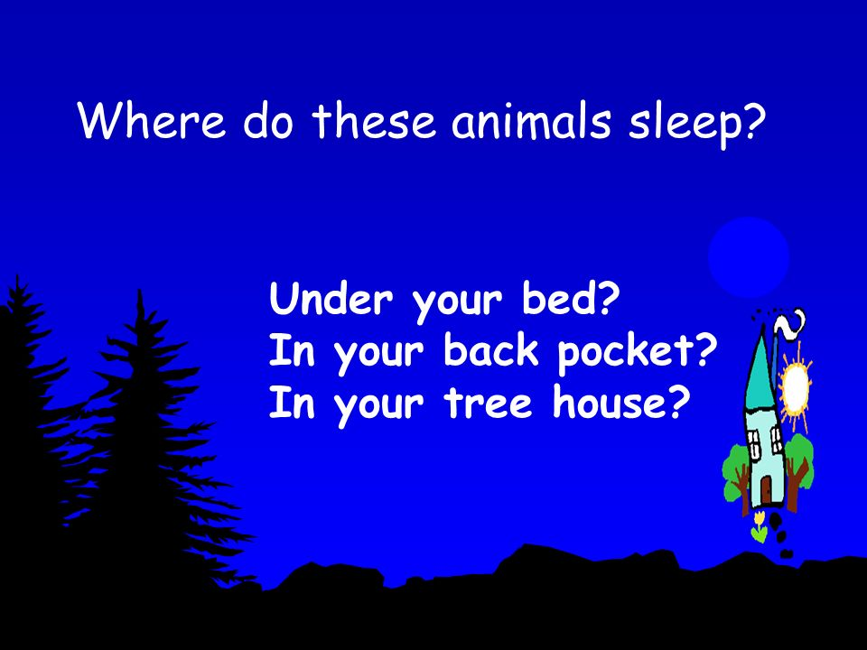 Where do these animals sleep