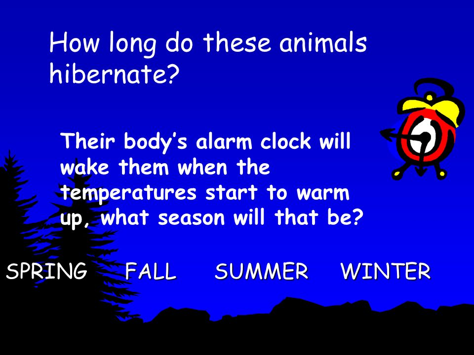 How long do these animals hibernate