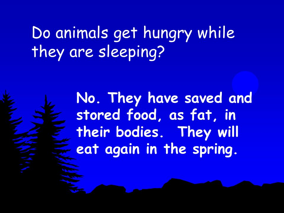 Do animals get hungry while they are sleeping