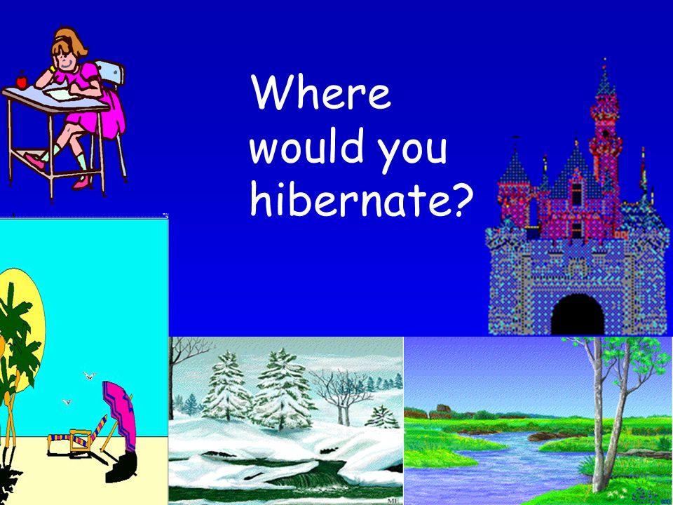 Where would you hibernate