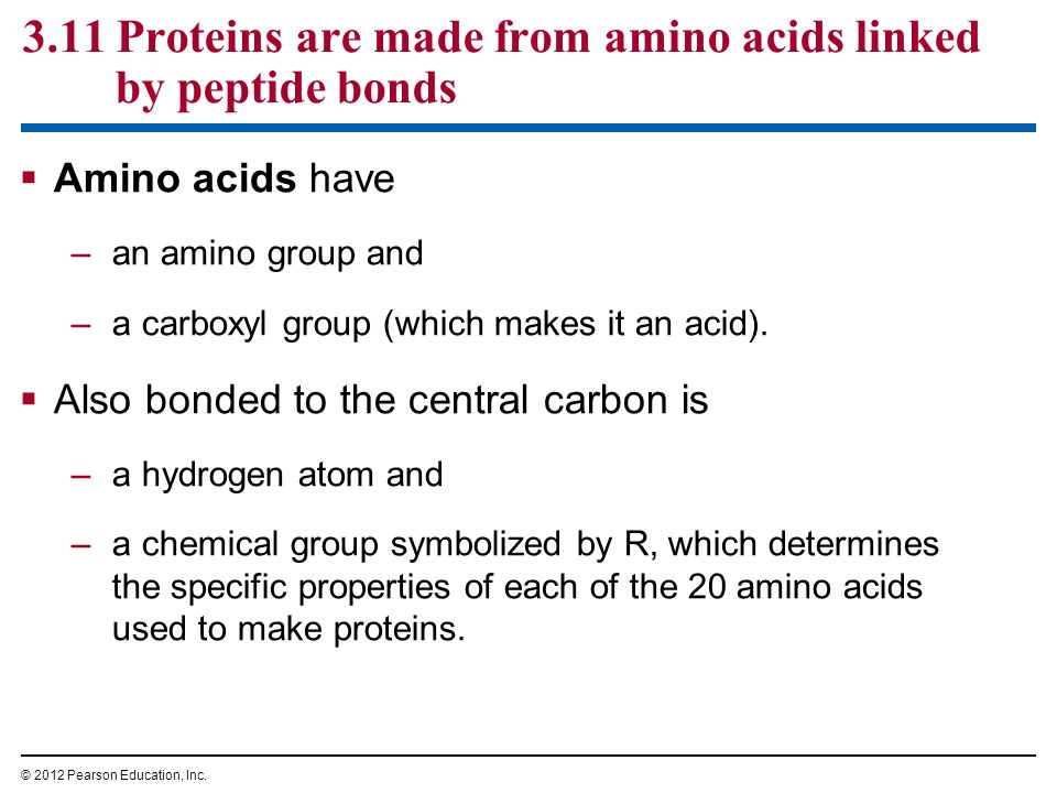 amino acid and protein relationship questions