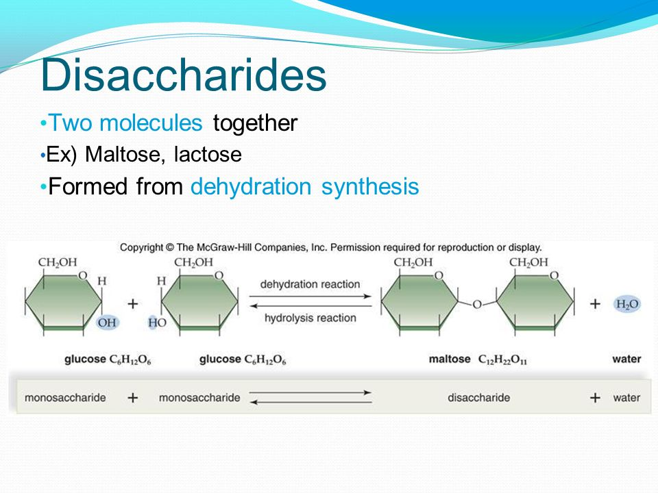 Disaccharides Two molecules together Formed from dehydration synthesis