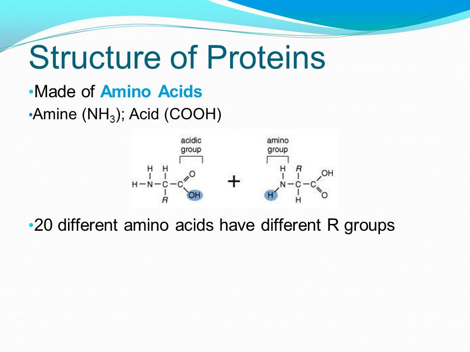 Structure of Proteins Made of Amino Acids