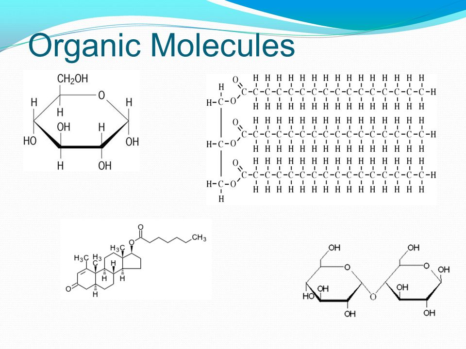 Organic Molecules Glucose, triglyceride/fat. Steroid (cholesterol), dissacharide (lactose ) *