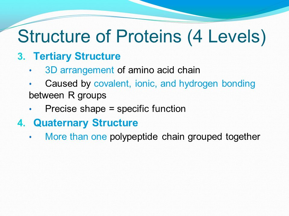 Structure of Proteins (4 Levels)