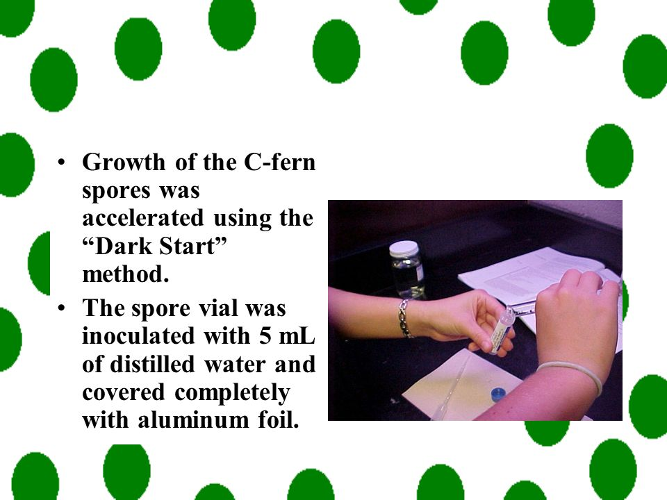 Growth of the C-fern spores was accelerated using the Dark Start method.