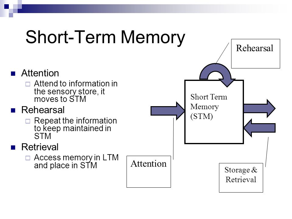the role of rehearsal in short term Several widely accepted models of memory postulate that the adequacy of an item's registration in long-term storage is a positive function of its length of stay in the short-term store however.