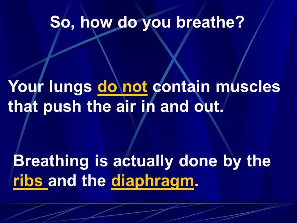 So, how do you breathe. Your lungs do not contain muscles that push the air in and out.