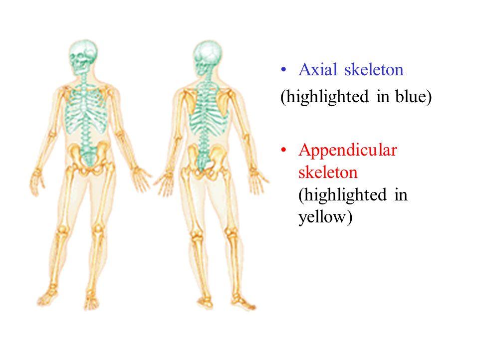 Fein Körper Systeme Zeitgenössisch - Menschliche Anatomie Bilder ...