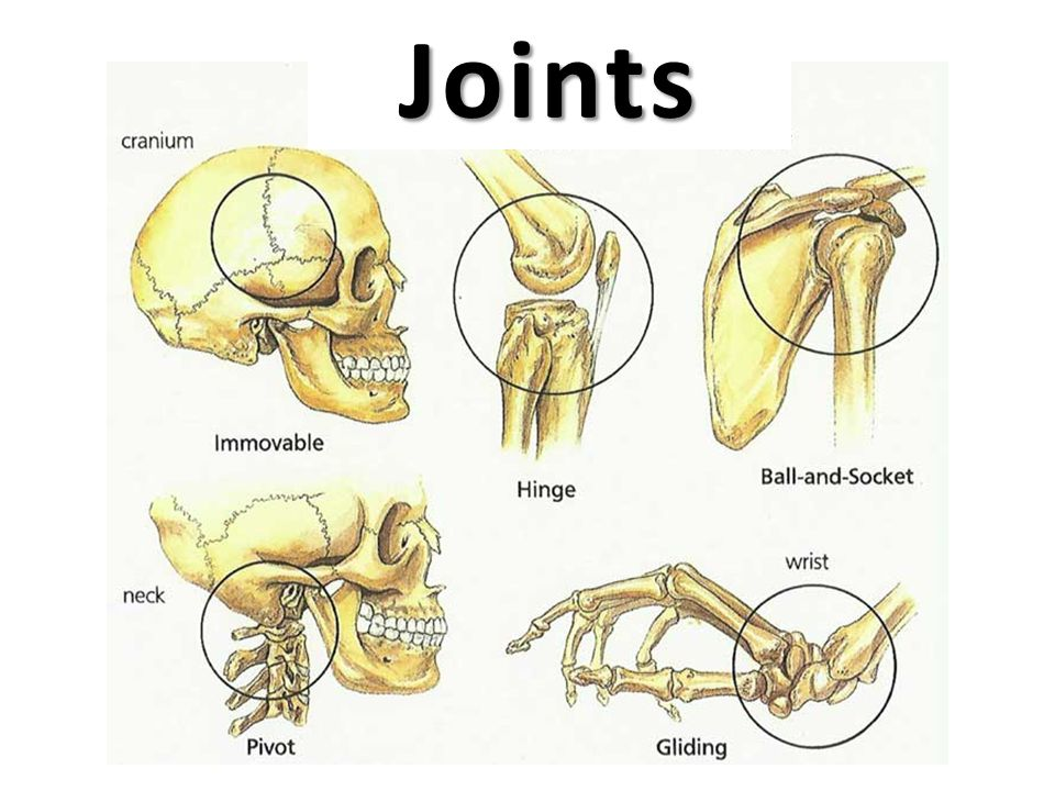 Fantastic Joints Ppt Video Online Download Wiring Cloud Hisonuggs Outletorg