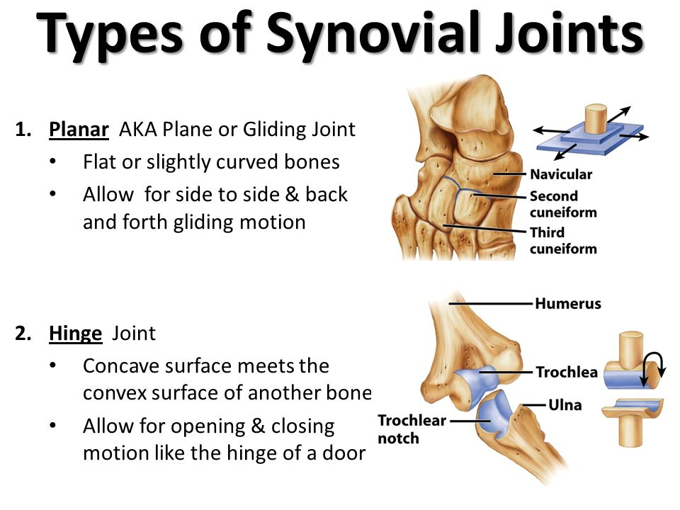 List of Synonyms and Antonyms of the Word: planar joint