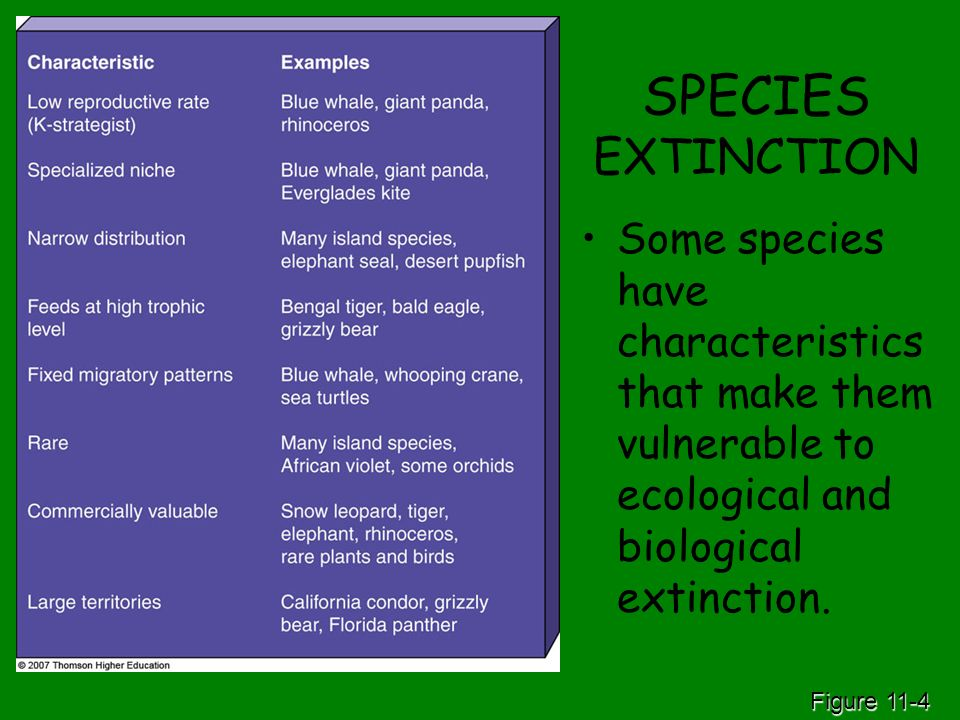 SPECIES EXTINCTION Some species have characteristics that make them vulnerable to ecological and biological extinction.