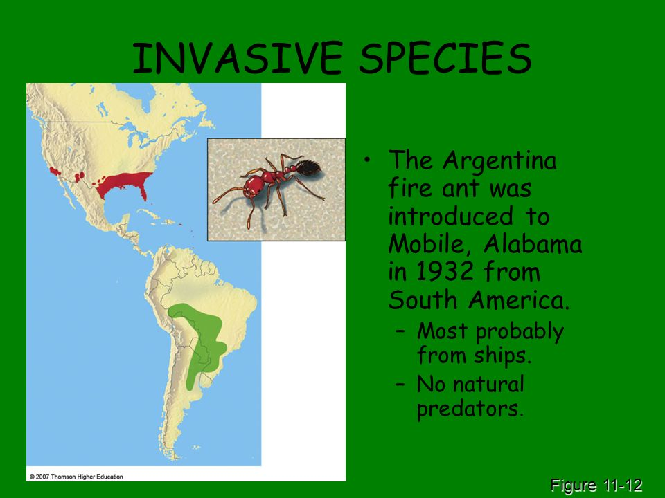 INVASIVE SPECIES The Argentina fire ant was introduced to Mobile, Alabama in 1932 from South America.