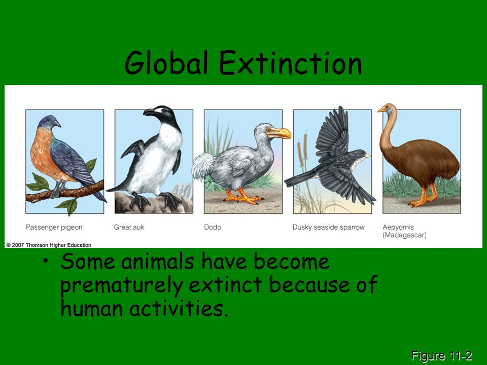 Global Extinction Some animals have become prematurely extinct because of human activities.