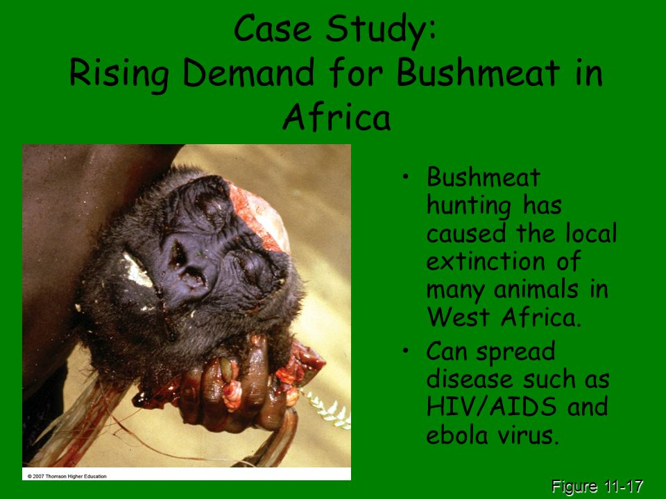 Case Study: Rising Demand for Bushmeat in Africa