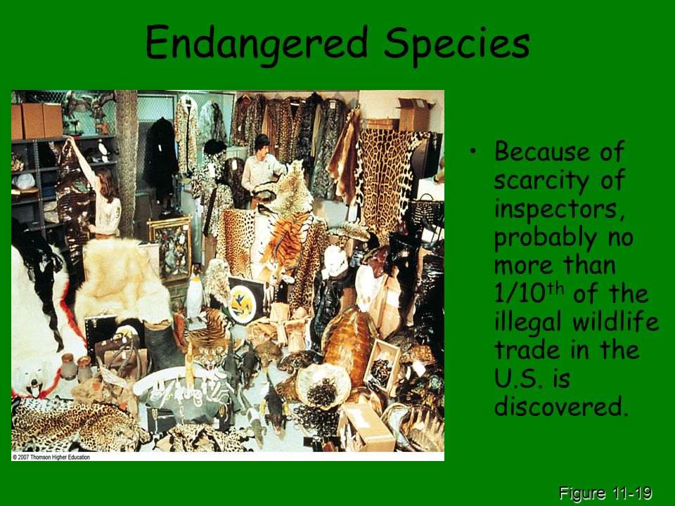 Endangered Species Because of scarcity of inspectors, probably no more than 1/10th of the illegal wildlife trade in the U.S. is discovered.