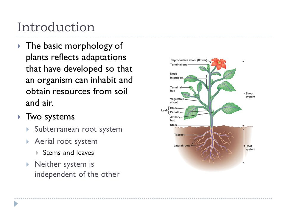 Plant structure growth development ppt download for Soil as a resource introduction