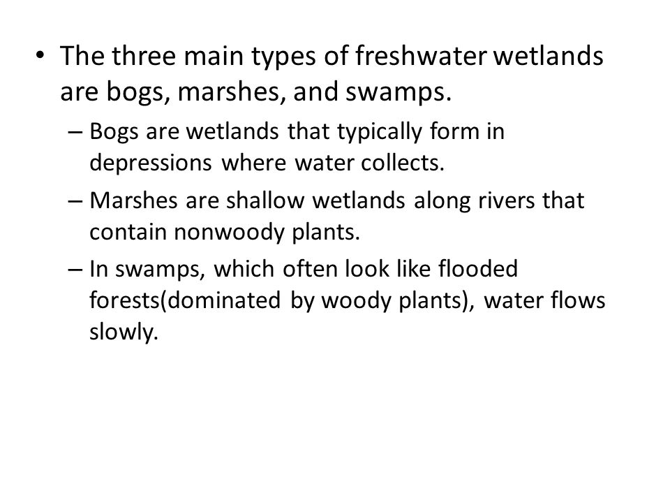 the main features of wetlands Types of wetlands marshes  in african swamps, papyrus is the main plant location swamps are found in low-lying areas near rivers or coastal areas examples .