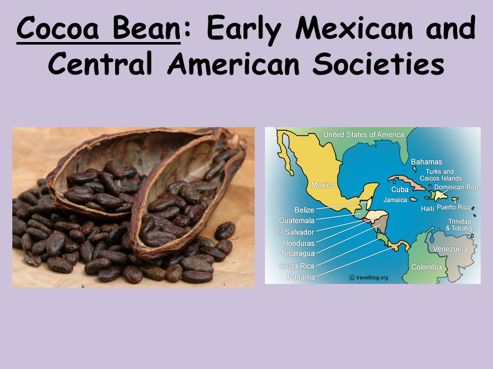 Cocoa Bean: Early Mexican and Central American Societies